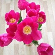 Тюльпаны оптом от 25 р. с доставкой в Улан-Удэ!